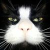 mistermoravec's avatar