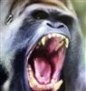 theoriginalblahblahblah's avatar