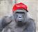 Harambe4Prez777's avatar