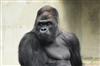 big_moomba's avatar