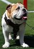 FLBulldog's avatar